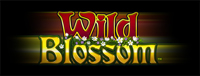 Relax and enjoy slots at Tulalip Resort Casino near Seattle on I-5 including the exciting Wild Blossom!